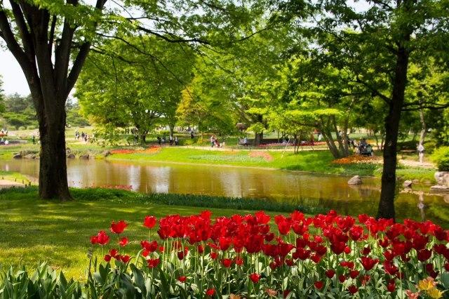 昭和記念公園です